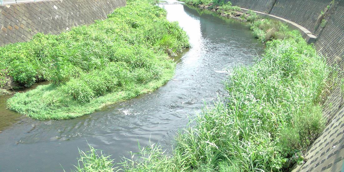 恩田川ちょい上流の様子