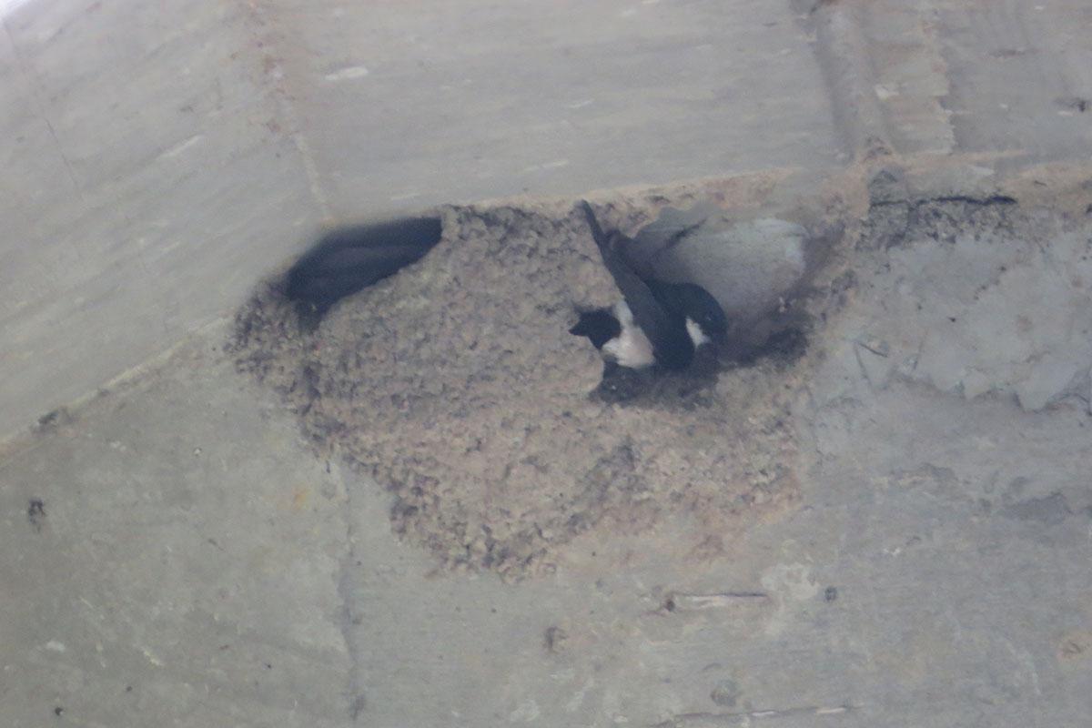 巣を修復中