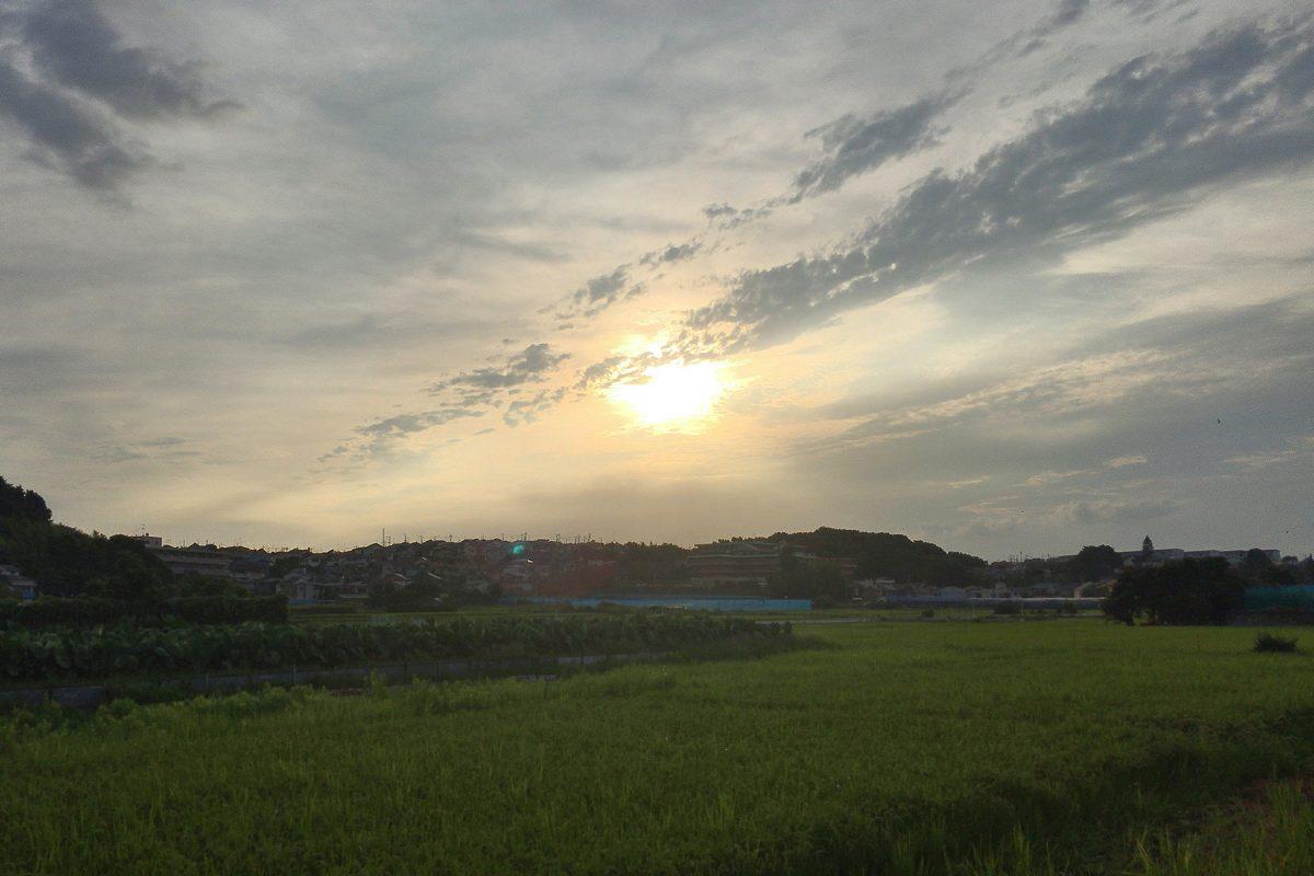 小山町の田んぼ