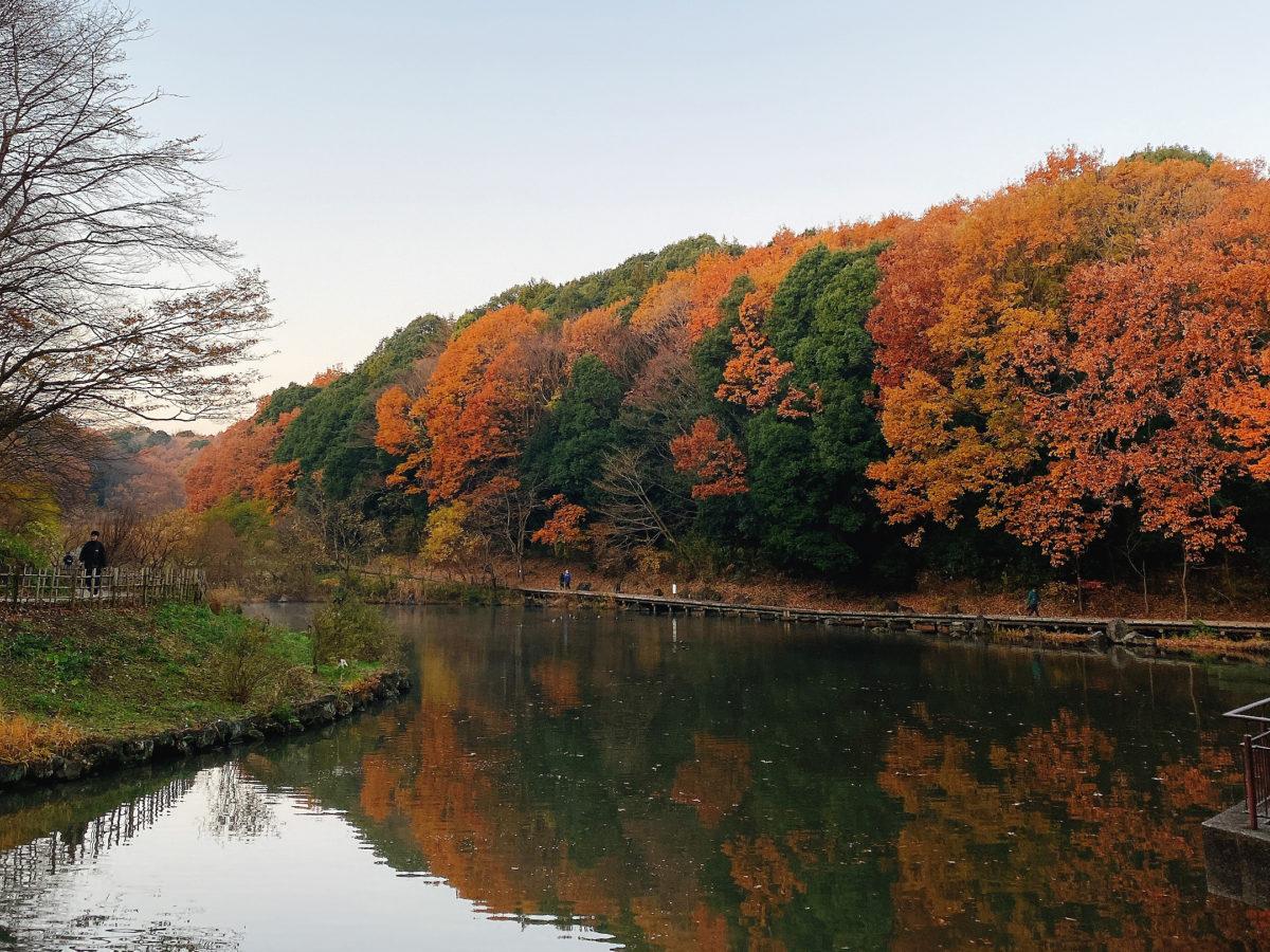 四季の森紅葉