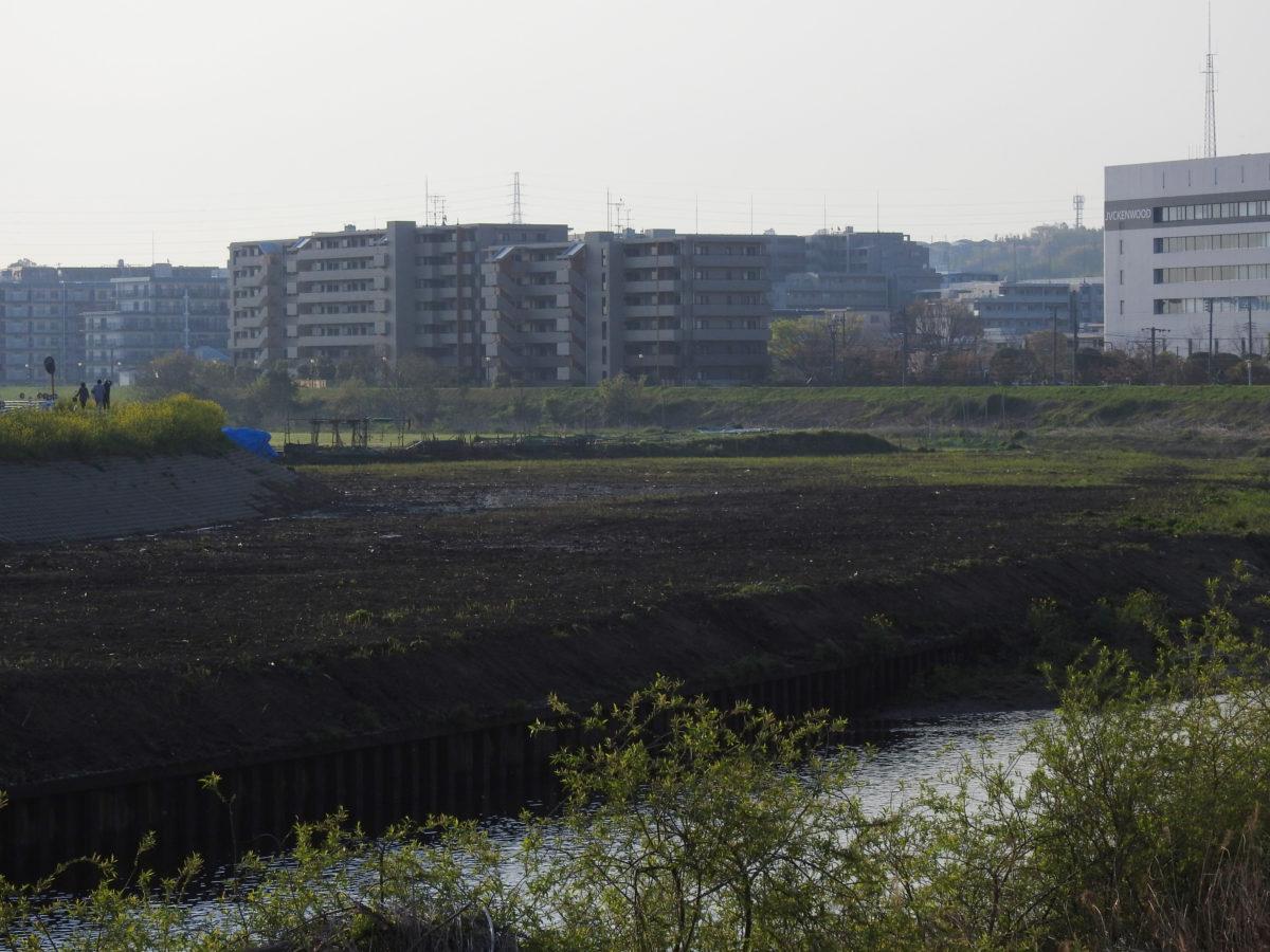 鶴見川の河原