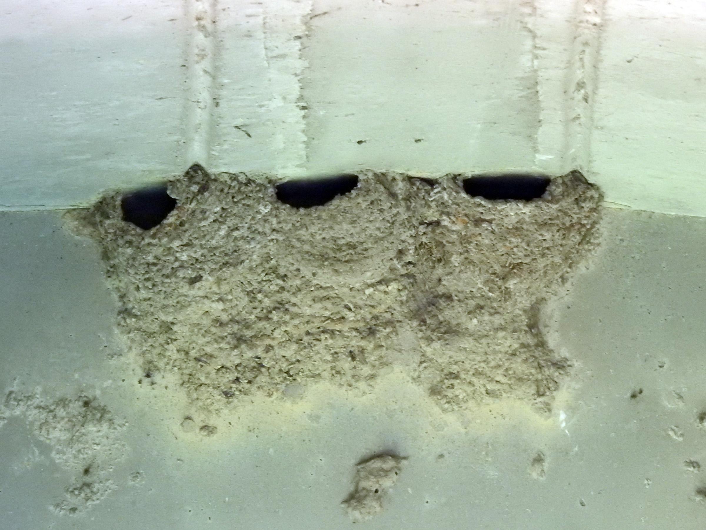 イワツバメの巣谷本川下流