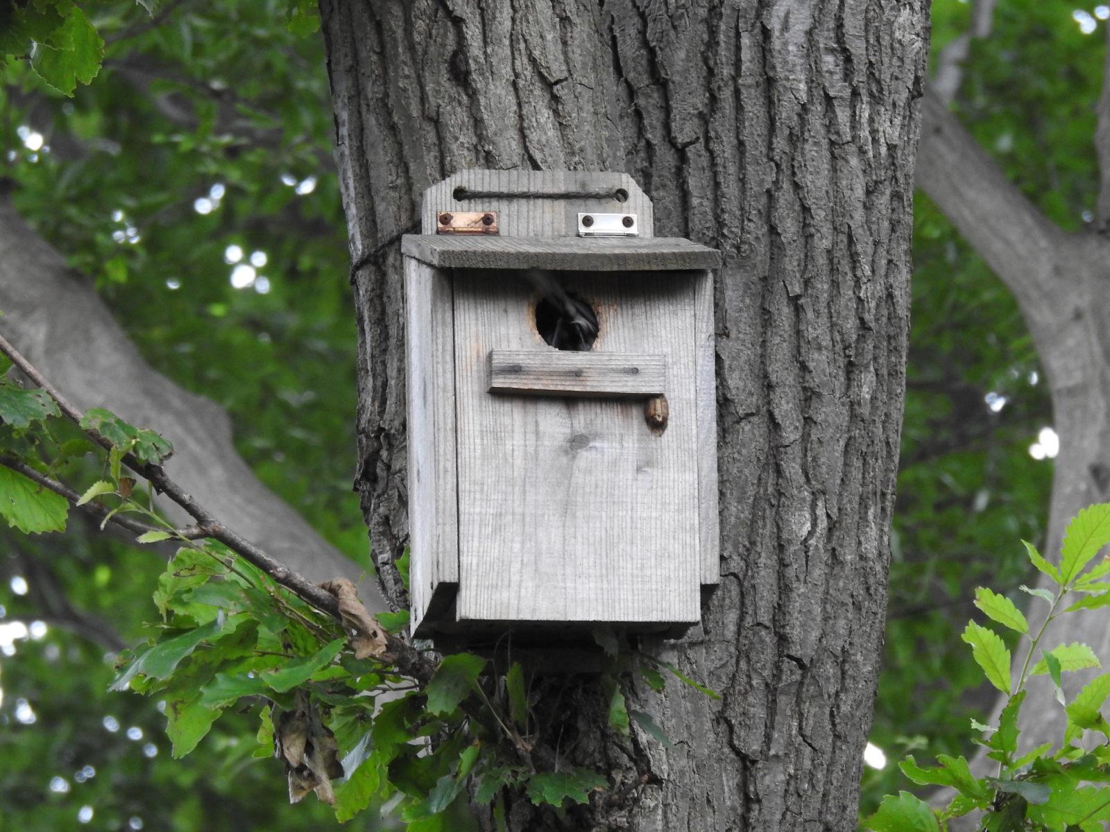 シジュウカラ巣箱