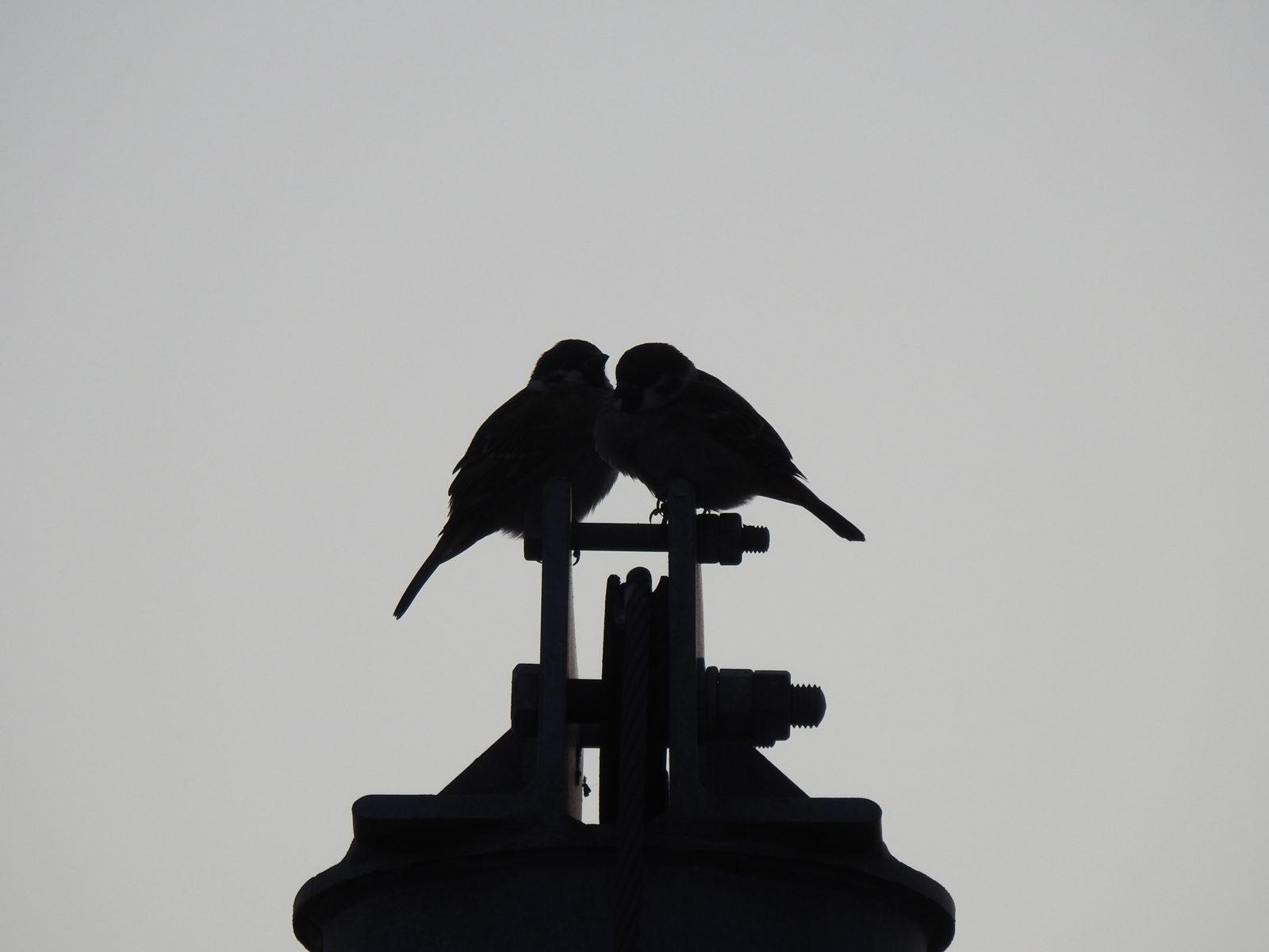 スズメ2羽
