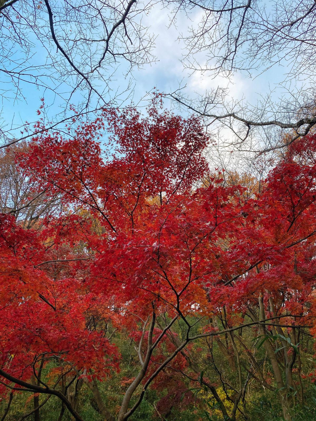 寺家の紅葉